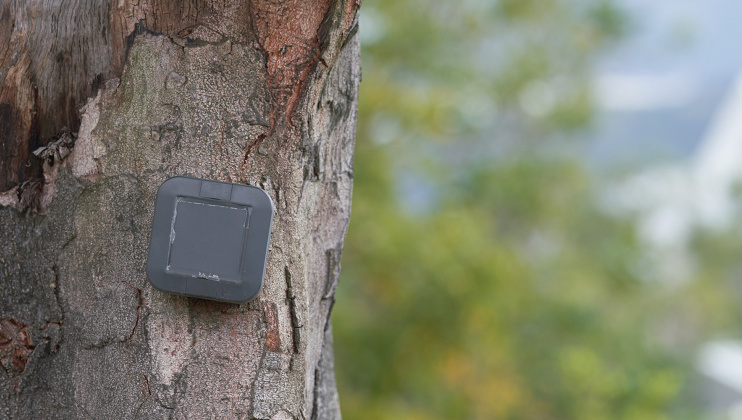 The smart sensor mounted on a tree at the HKUST campus helps to monitor the tree's stability.